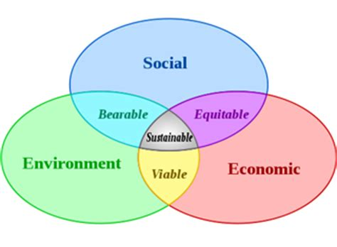 What Is an Individuals Role in Society? - Essay